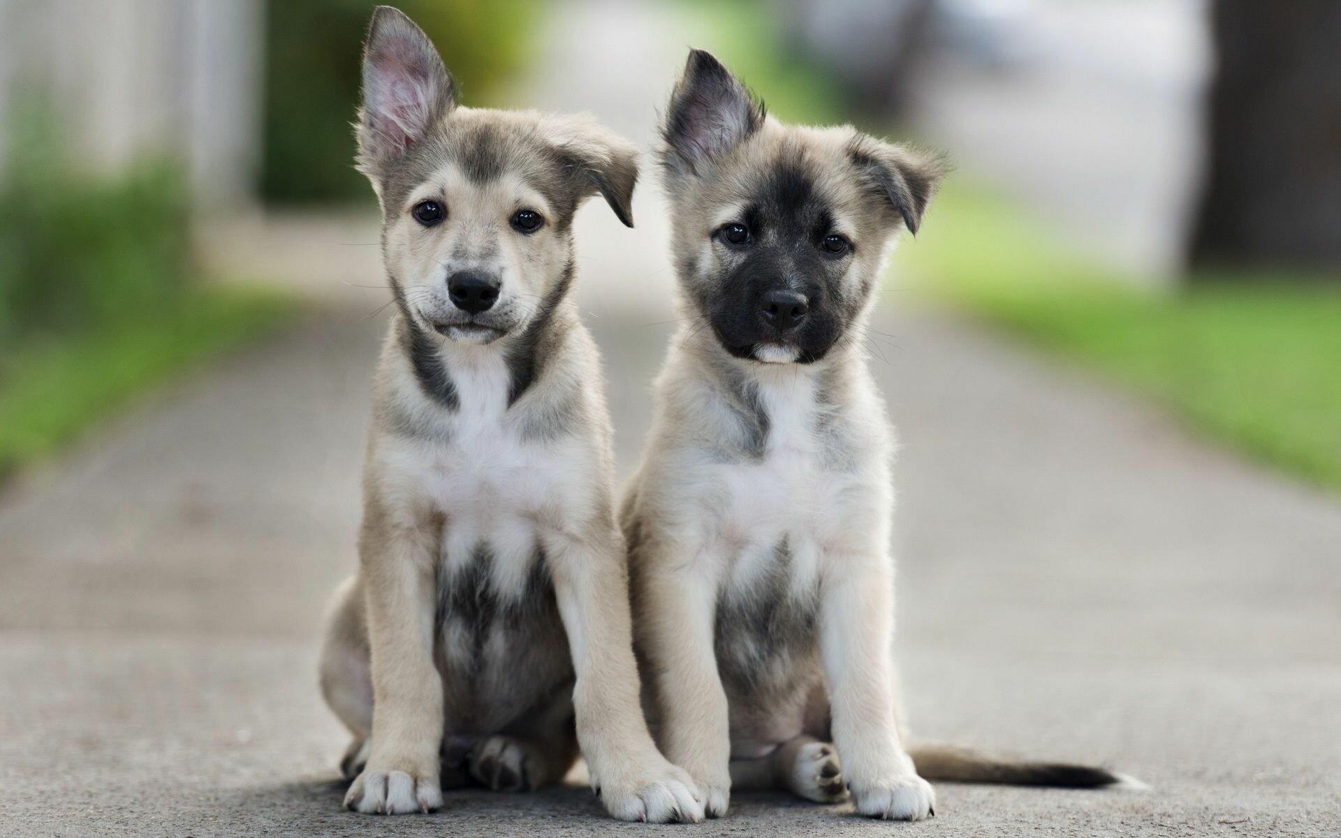 Социализация щенка – на что важно обратить внимание
