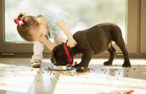 Кормление щенка от 1 месяца до года: чем кормить, когда кормить и сколько еды скармливать щенку