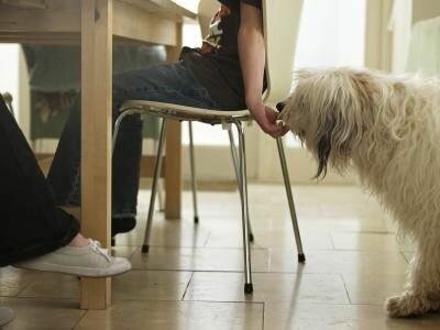 Как отучить собаку попрошайничать у стола