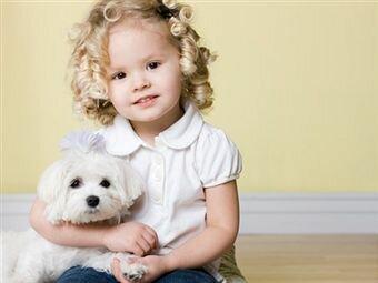 Ребенок просит собаку – что делать родителям
