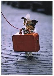 С собакой в дорогу? Легко!