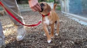 команда рядом как научить щенка