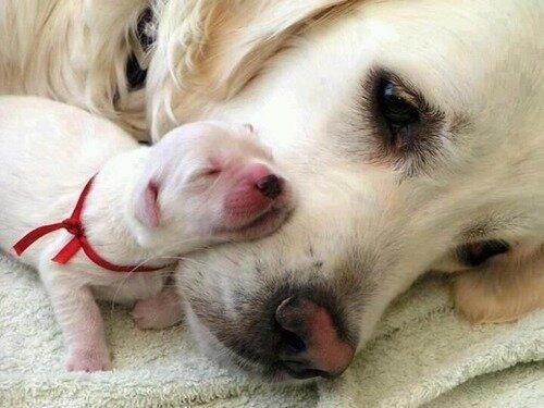 Уход за новорожденными щенками – первые две недели