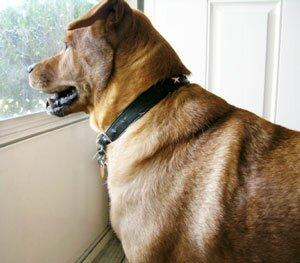 Собака и посторонние люди в доме