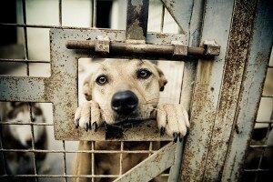 10 простых способов помочь приюту для бездомных животных