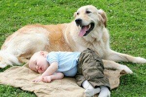 Самые добрые породы собак – ТОП-10