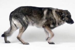 страх - одна из причин собачьего непослушания