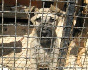Безопасность собак в приюте - практические советы