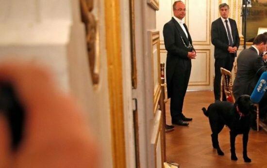 Президент Франции взял собаку из приюта