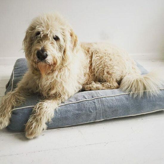 Гостиница для собаки: как выбрать лучший вариант для своего питомца