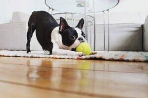 Развивающие игрушки для собак: что нужно вашему питомцу