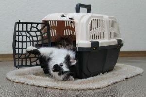 Выбираем сумку-переноску для домашних животных в магазине Е-зоо