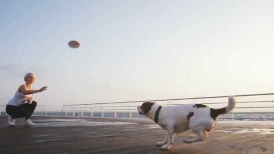 Воспитание и начальная дрессировка щенка с помощью игрушек